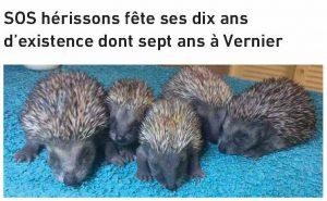 ActuVernier04_2016_SOS herissons